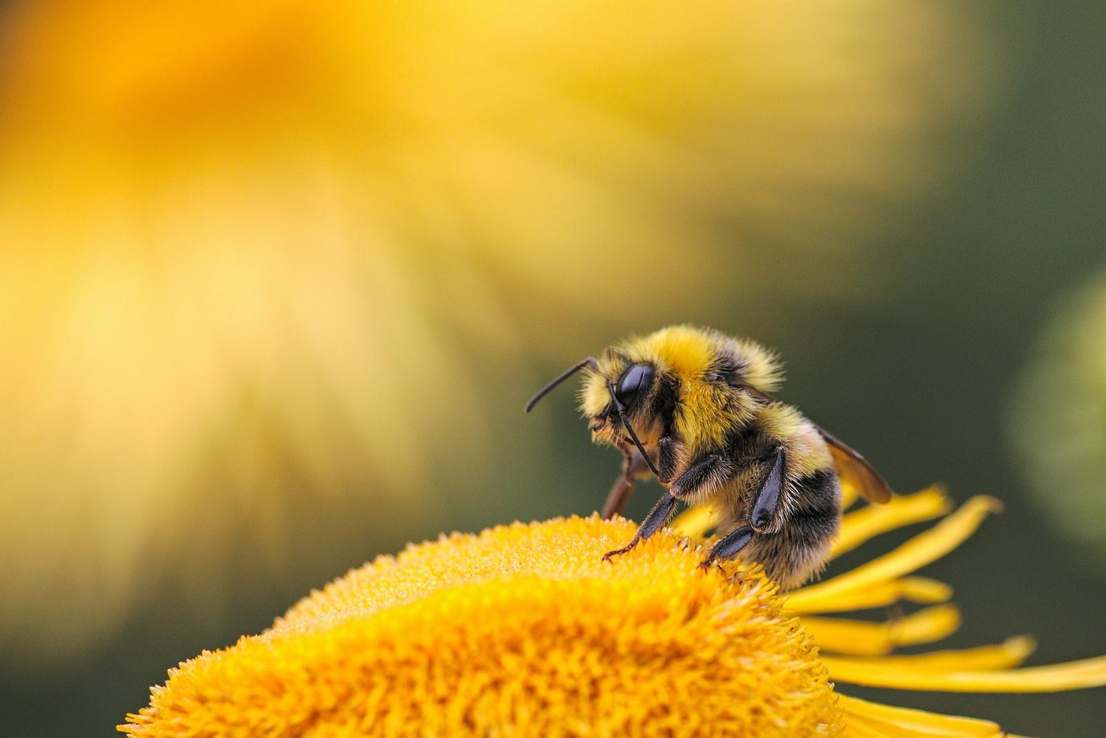 Грамотное одобрение и получение любого кредита в Bee-Kredit